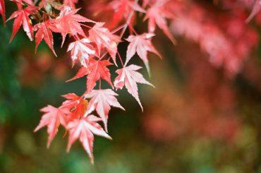 Herbstblätter (Pixabay)